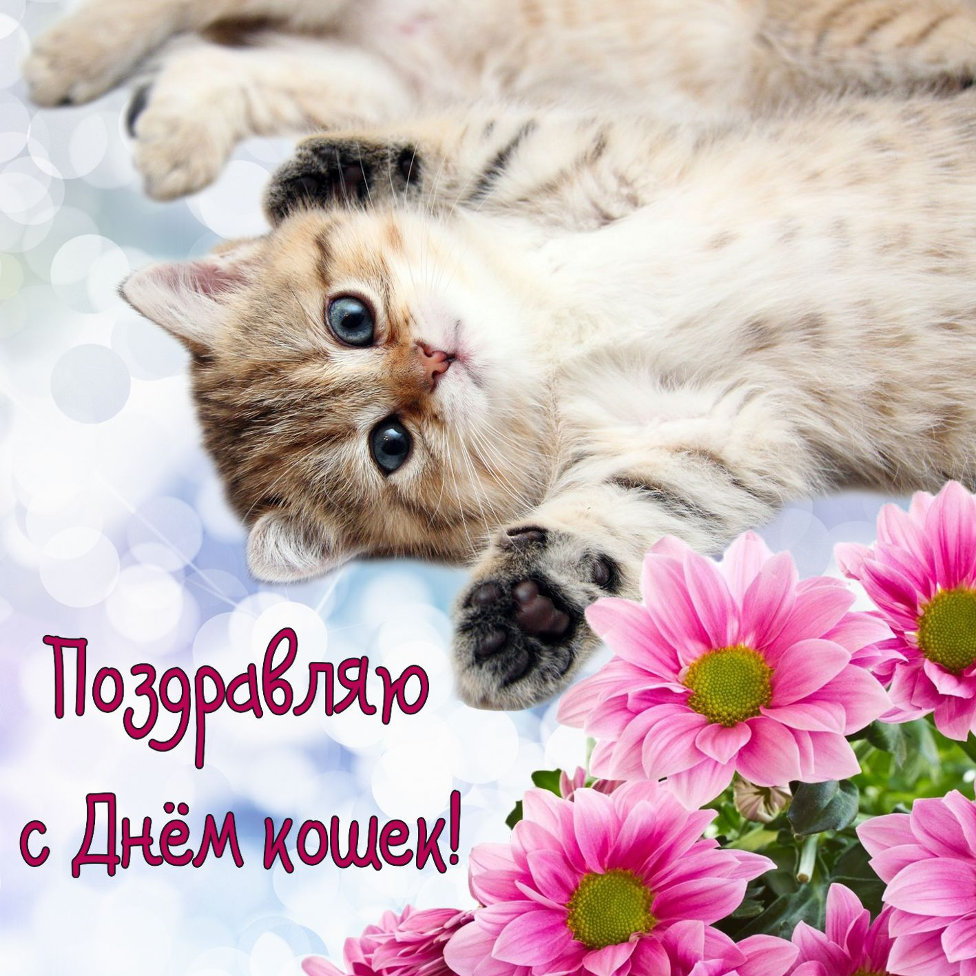 С днём кошки открытка 115