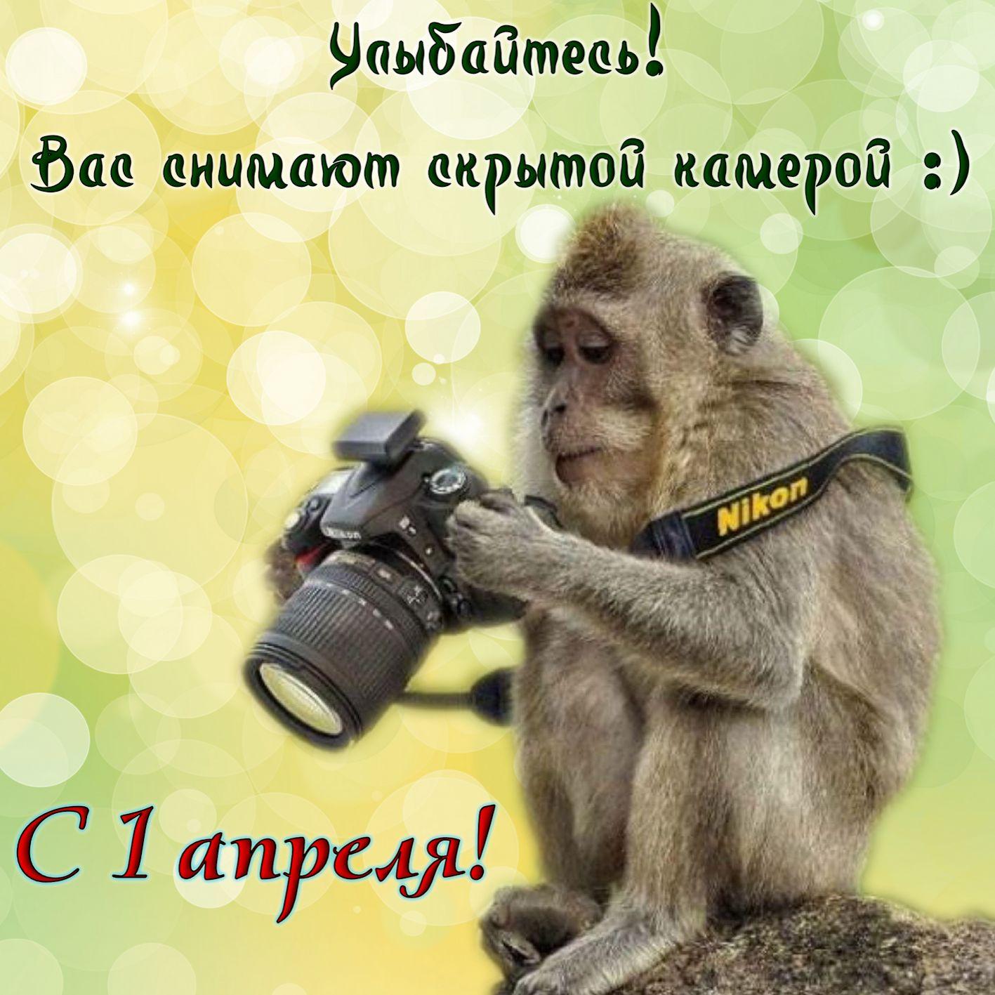 Обезьянка с фотоаппаратом к 1 апреля