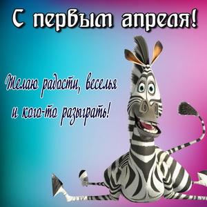 Смешная зебра поздравляет с 1 апреля