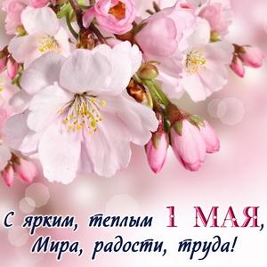Нежные весенние цветы к празднику 1 Мая