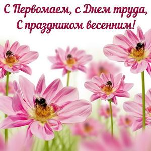 Розовые цветочки с пчелками на День труда