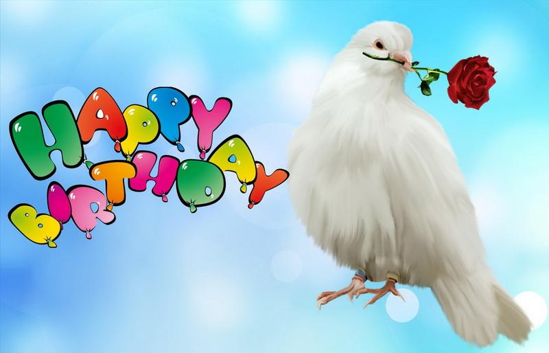 С днём рождения, голубь