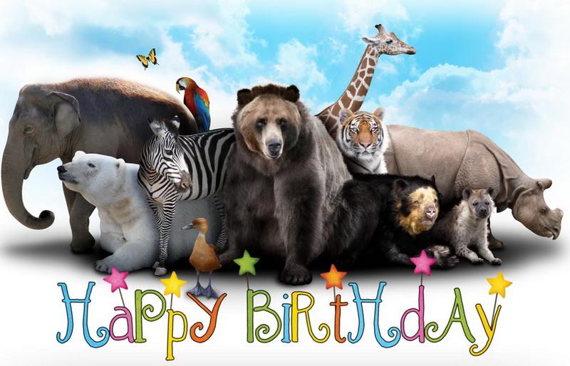 Happy Birthday, дикие животные