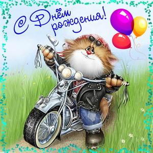 Картинка на День рождения с котиком на мотоцикле