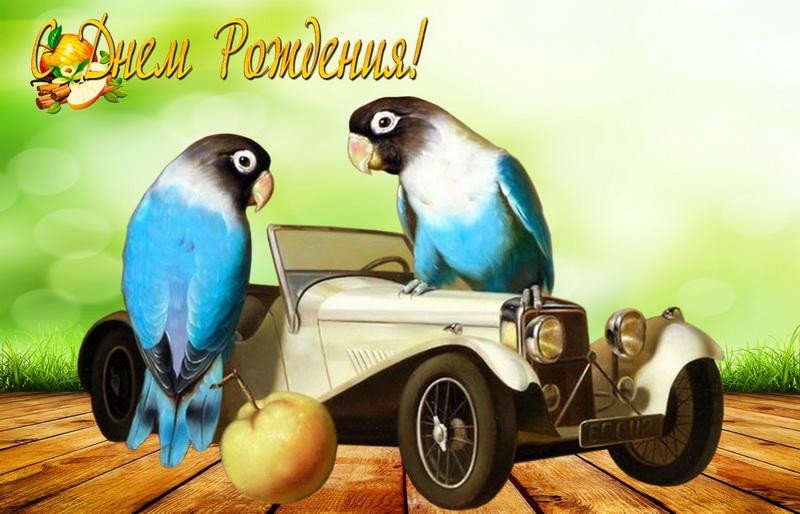 С днём рождения, старинная машина, попугаи