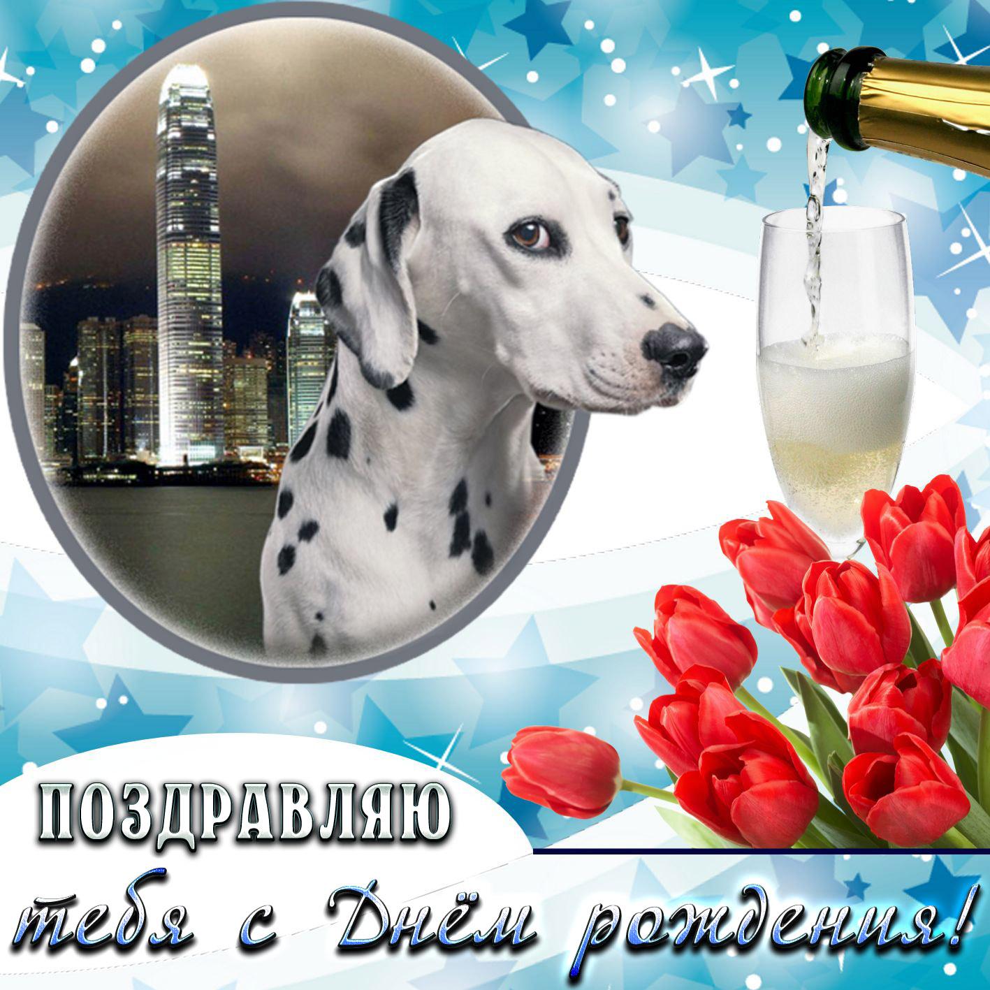 Открытка с тюльпанами и собачкой на День рождения