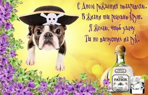 Собачка в шапке пирата и пожелание