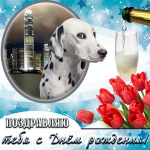Открытка с тюльпанами и собачкой