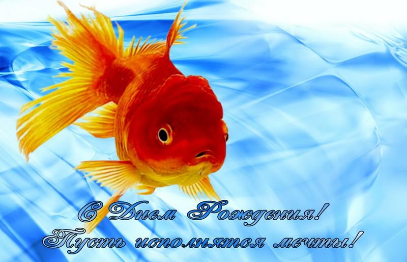 С днём рождения, золотая рыбка!