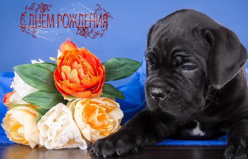 С днём рождения, собачка, букет цветов.