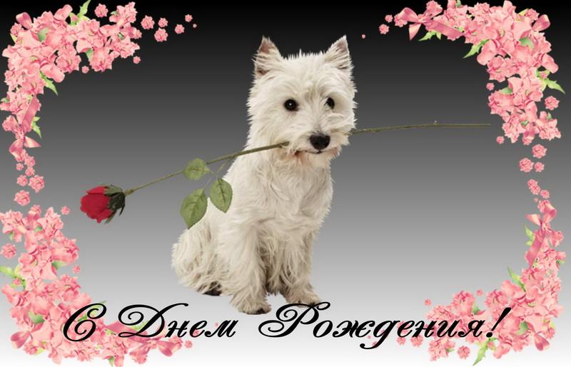 Поздравляю, собачка с цветком