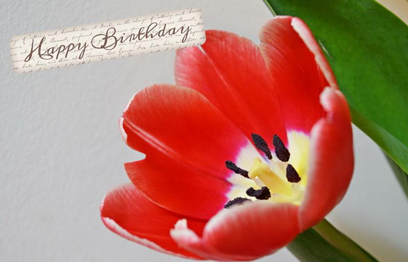Happy Birthday, красный мак