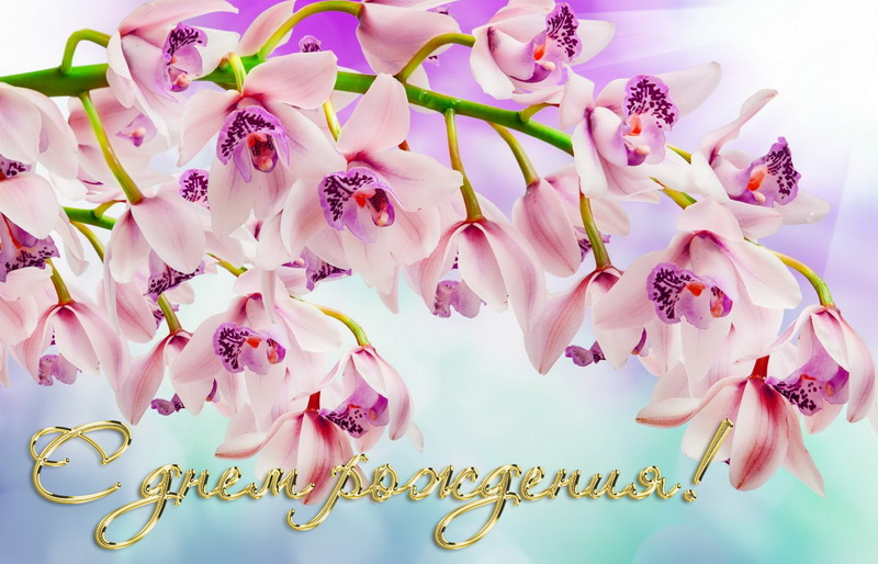 Открытка женщине, фиолетовые цветы