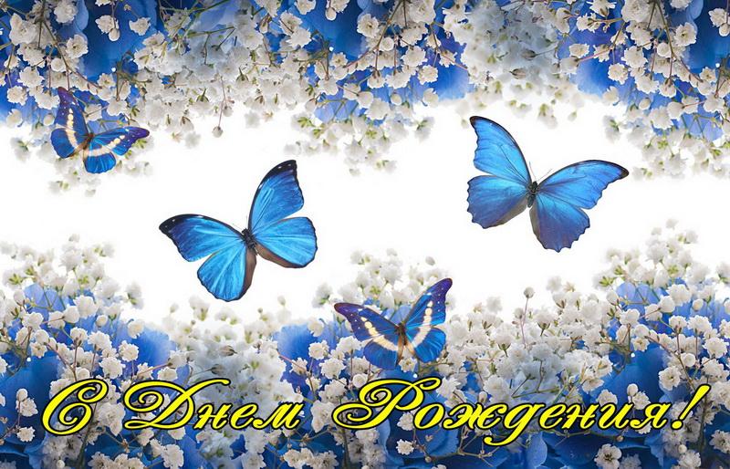Поздравление, синие бабочки