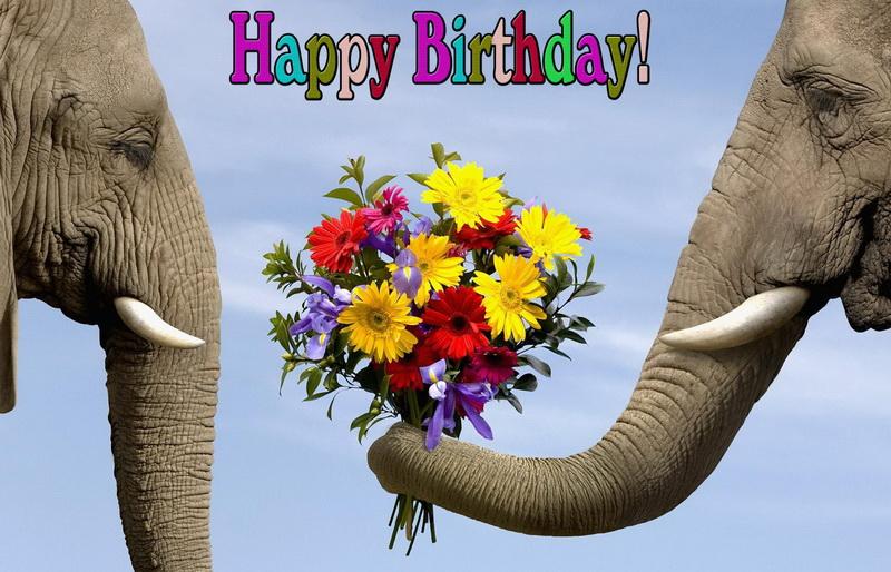 Happy Birthday, слоны с красивым букетом
