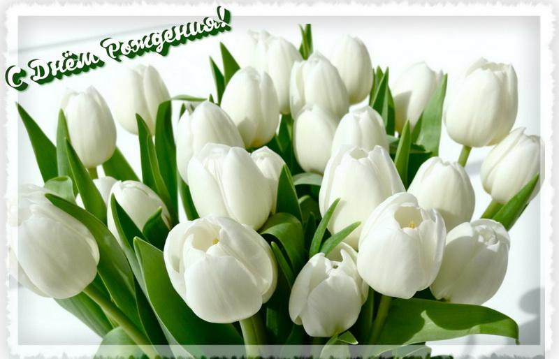 С Днём Рождения, букет белых тюльпанов