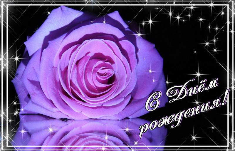 открытка - огромная роза на темном фоне с блестками
