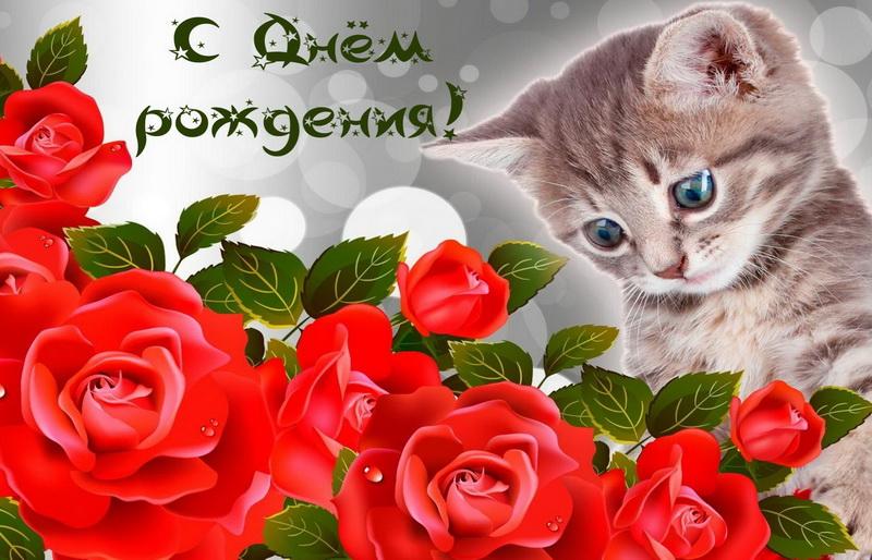 открытка - котенок и красные розы на День рождения