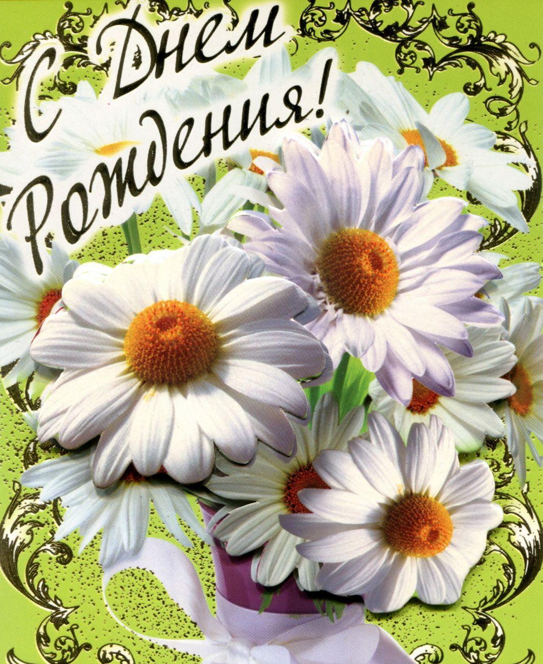 открытка - большие красивые ромашки на День рождения