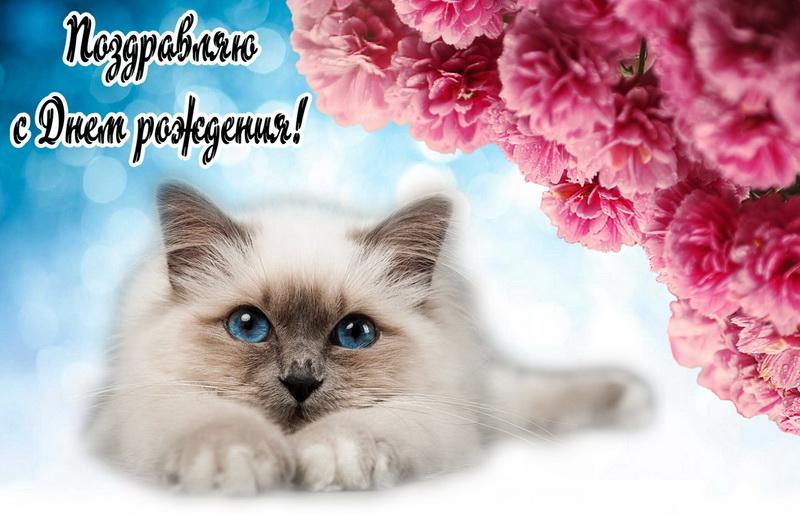 Открытка с Днем рождения - очень красивый котик на фоне цветов