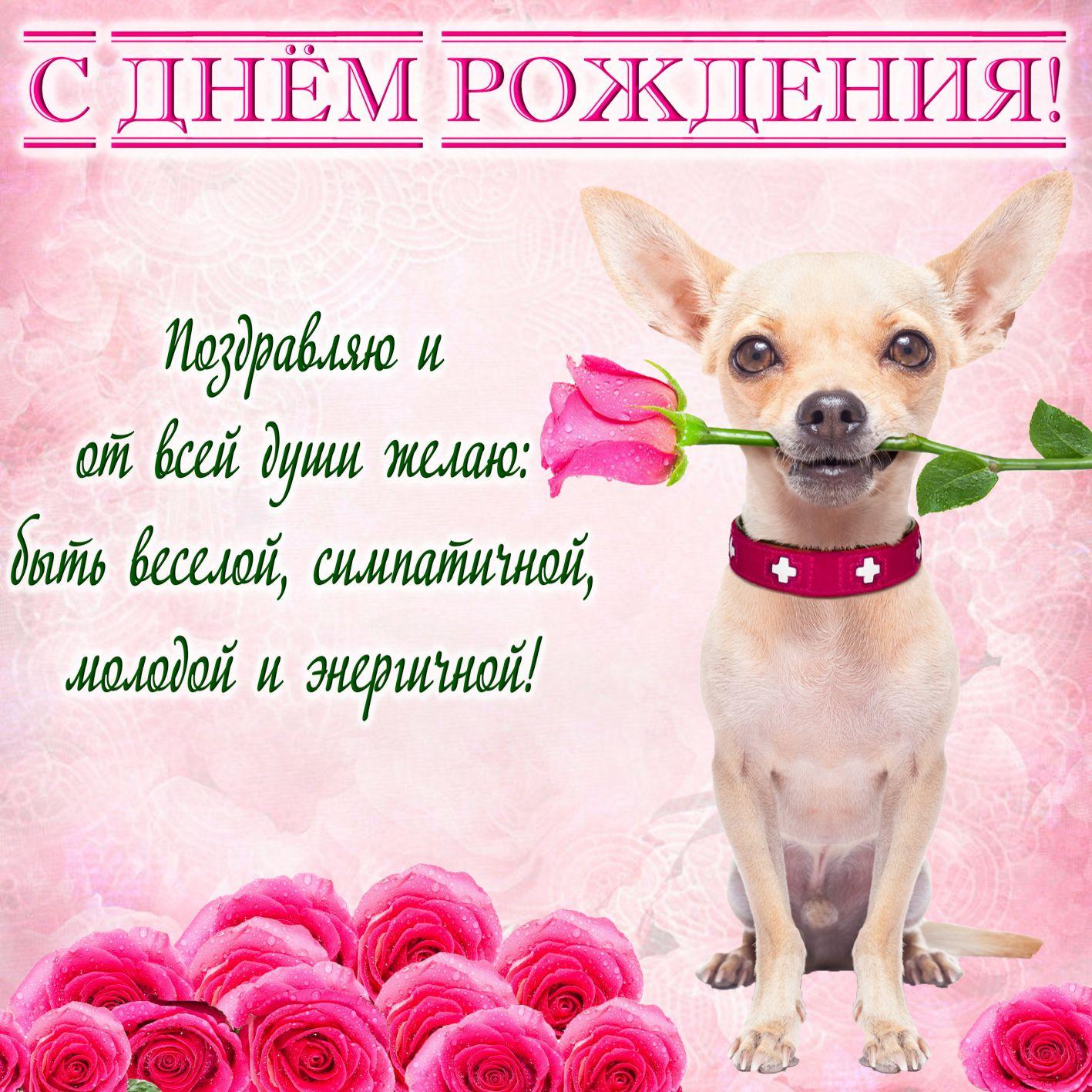 Милый песик с розой на День рождения девушке