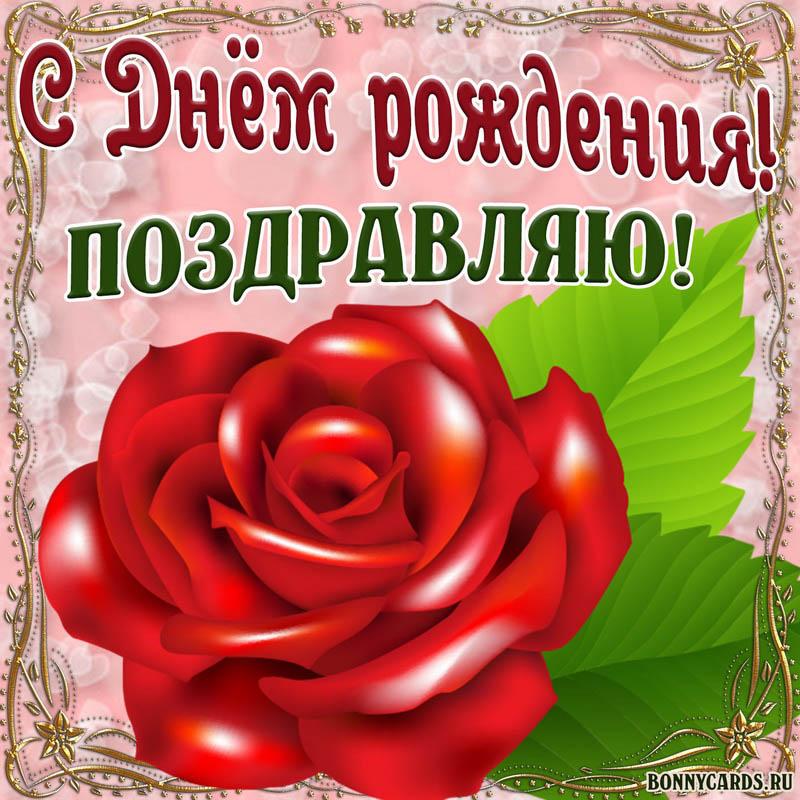 Огромная красная роза на картинке женщине на День рождения