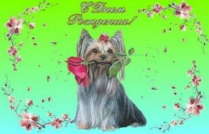 Поздравление, собачка с цветком