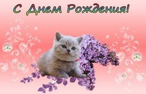 С днём рождения, котик, сирень