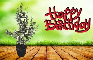 Открытка Happy Birthday, денежное дерево