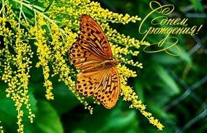 С днём рождения, бабочка, цветы