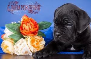 Поздравление, собачка, букет цветов
