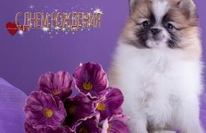 Поздравляю, красивая собачка