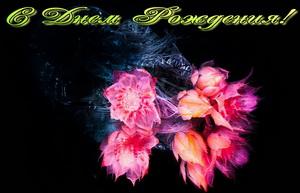 Поздравление женщине, красивые цветы