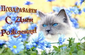 Женщине, поздравляем тебя, красивый котик