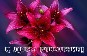 С днем рождения, бордовые цветы