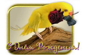 На день рождения, попугай с розой