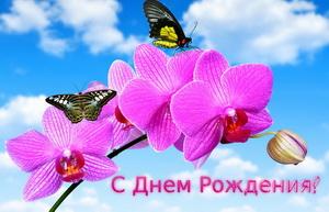 С днем рождения, розовые цветы, бабочки, небо