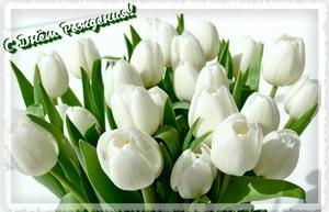 С Днём Рождения, букет белых тюльпанов.