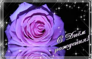 Огромная роза на темном фоне с блестками