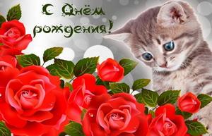 Котенок и красные розы на День рождения