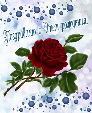 Большая роза на красивом фоне