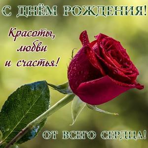Большая красная роза в капельках росы