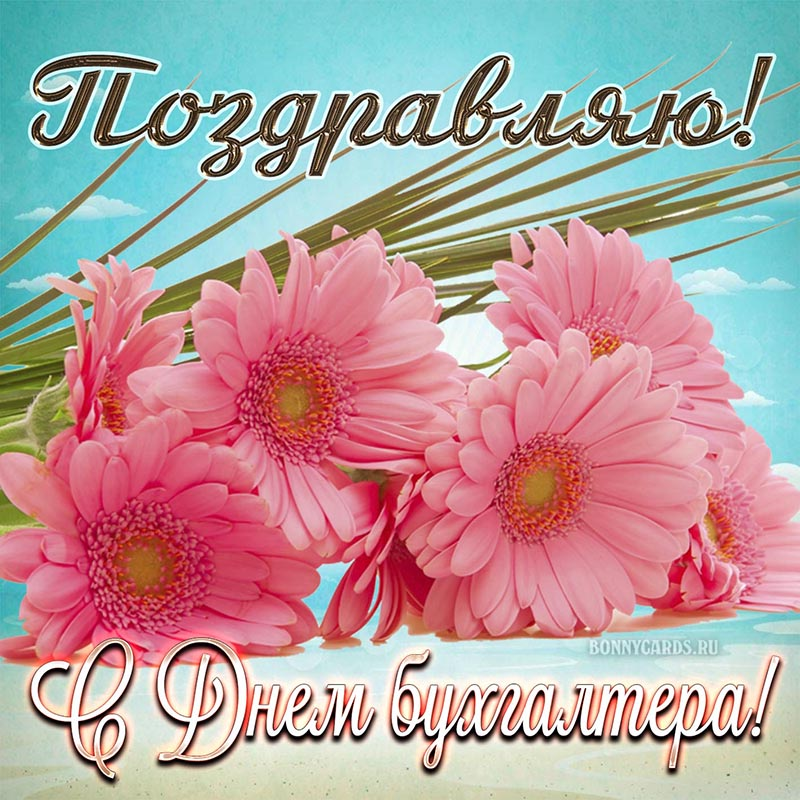 Открытка - поздравление с Днём бухгалтера с розовыми цветами