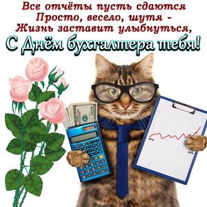 Забавный котик с калькулятором