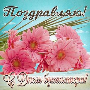 Поздравление с Днём бухгалтера с розовыми цветами