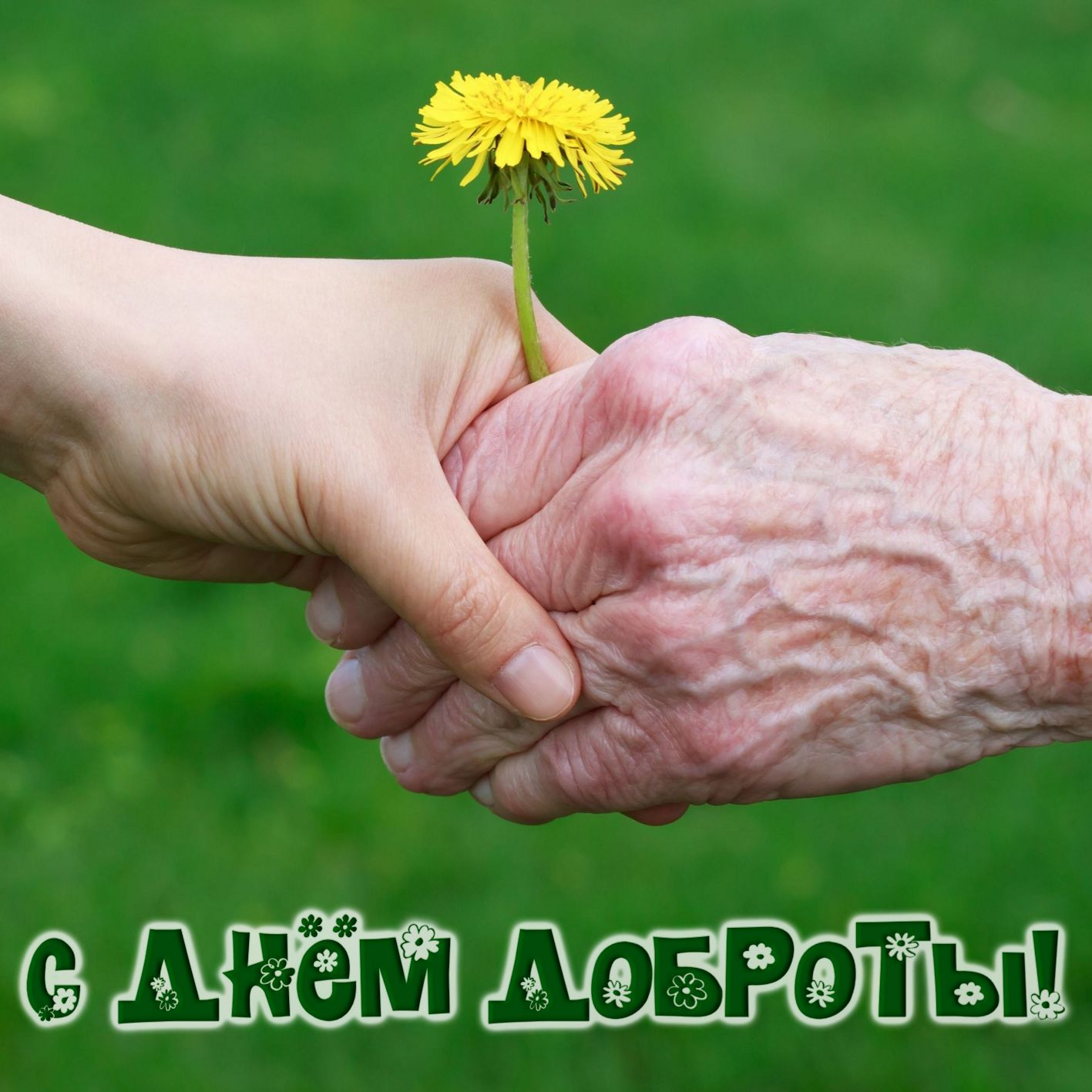 Открытка на День доброты - две руки с одуванчиком на зеленом фоне