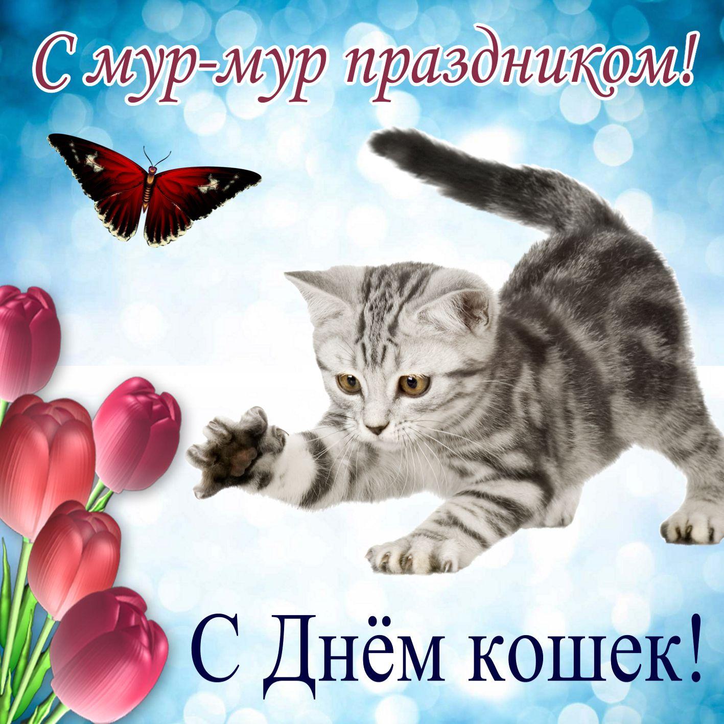 Открытка на День кошек - играющий котенок с бабочкой и тюльпанами