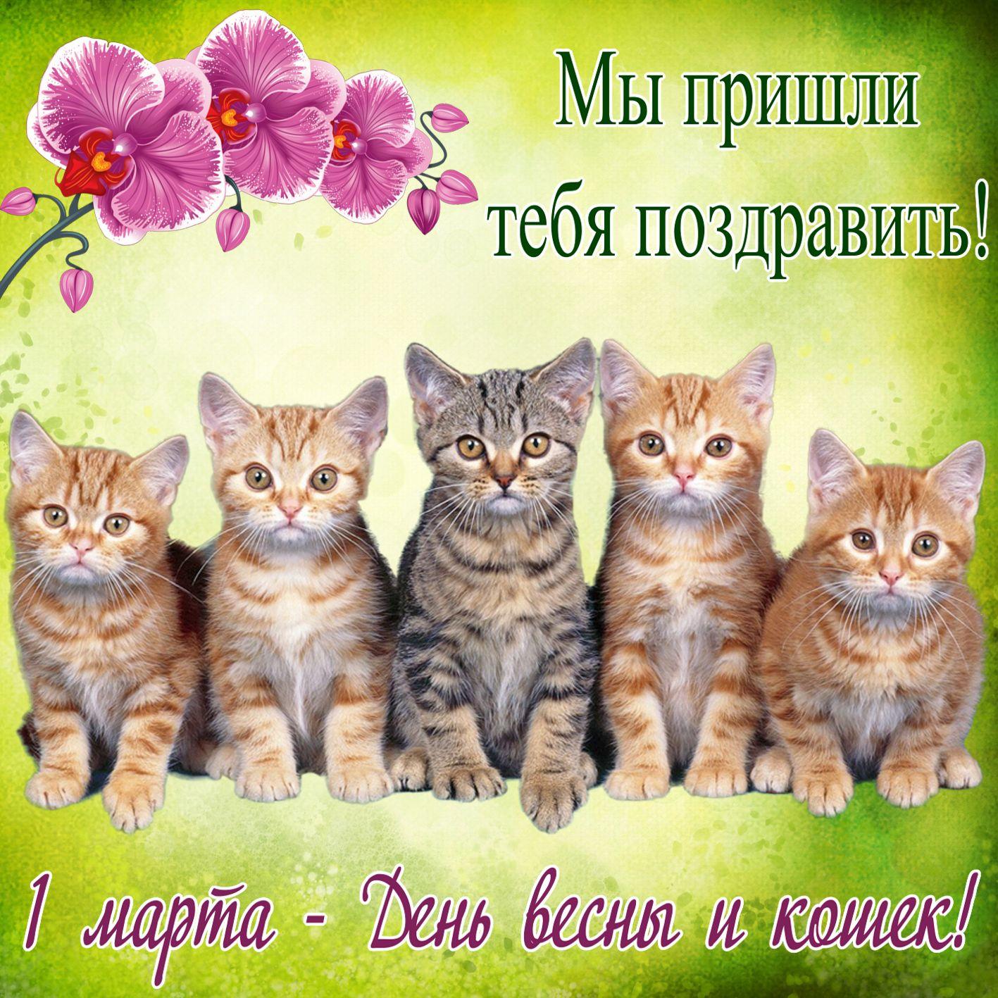 Котята поздравляют с днем весны