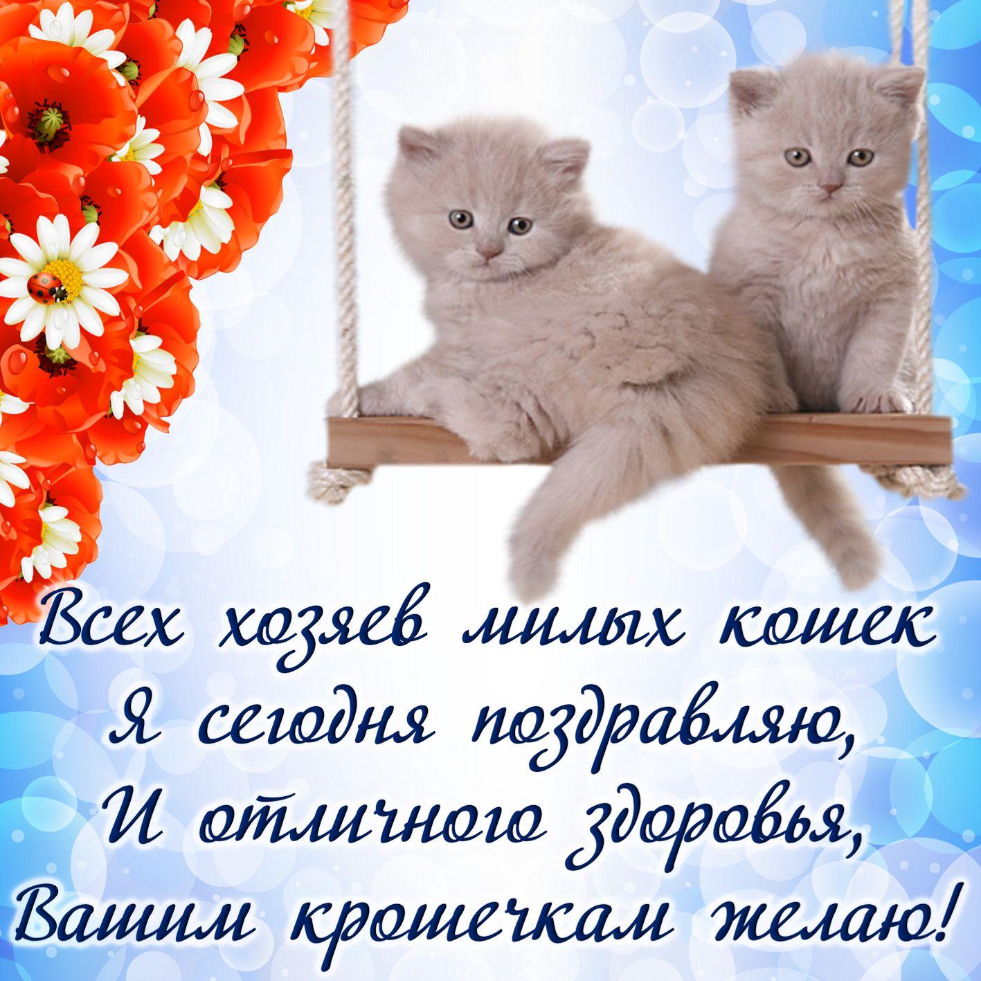 Открытка на День кошек - пожелание и белые котята к празднику