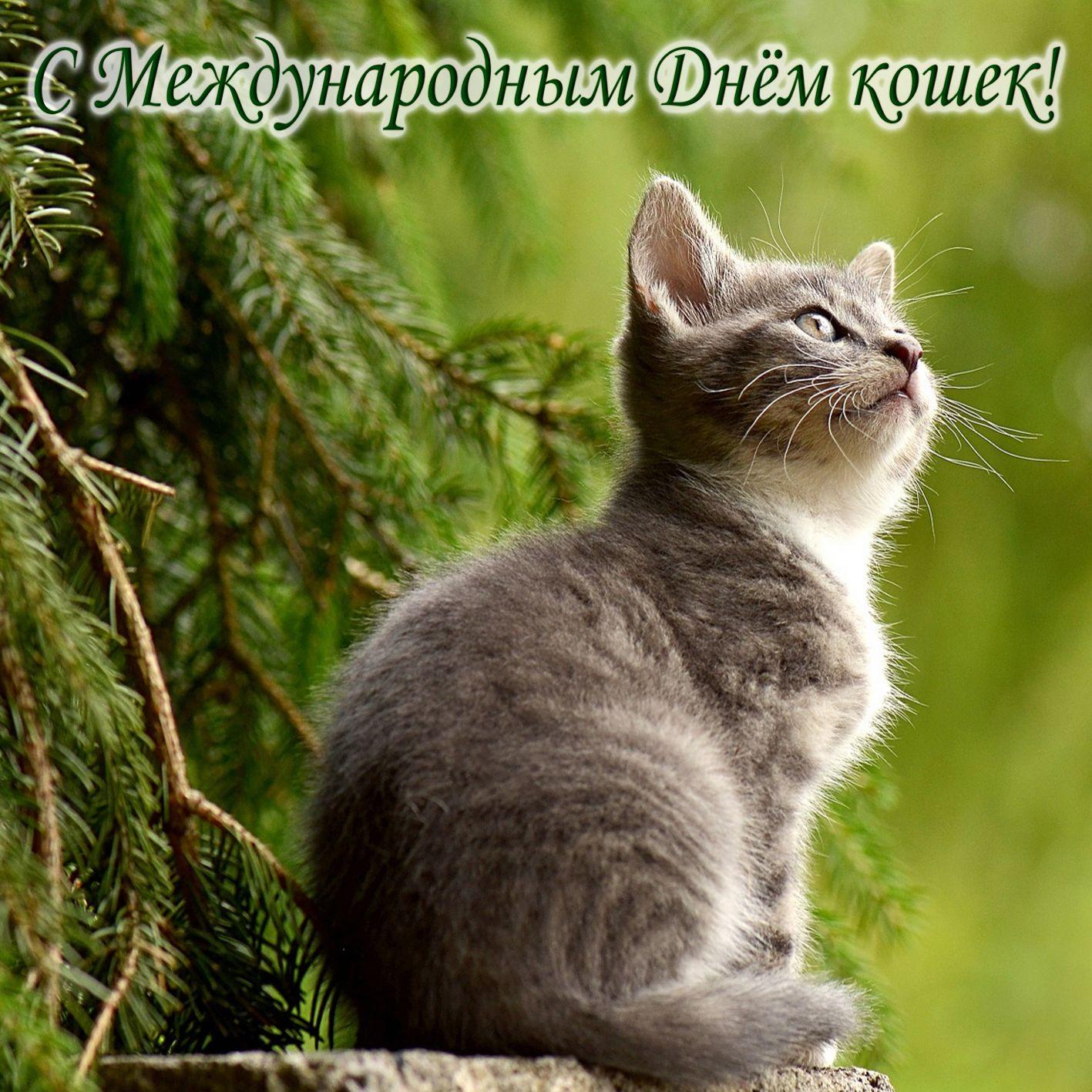 Открытка на День кошек - мечтающий котик на зеленом фоне